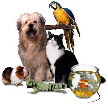 Exotic and Traditional Pets Together