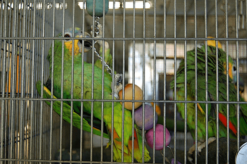 How to Choose the Best Parrot Toys