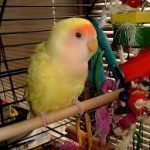 Best Parrot Toys: A Bird and His Toys