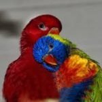 Best Parrot Toys: Two birds cuddling