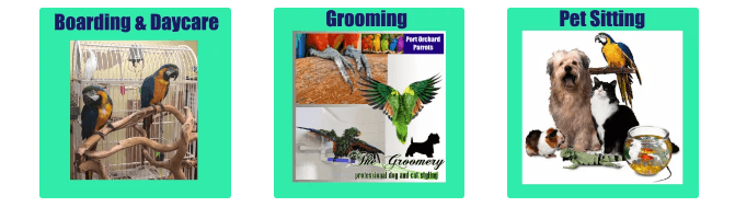 Best Parrot Toys: Services provided by Port Orchard Parrots Plus