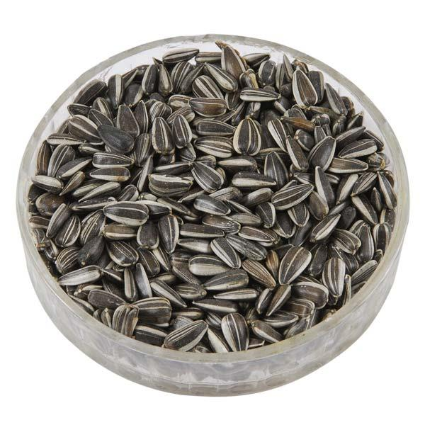 Sunflower Seeds: Pro and Con