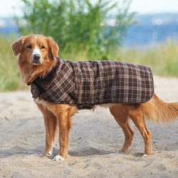 Outdoor Dog Country Plaid Dog Coat